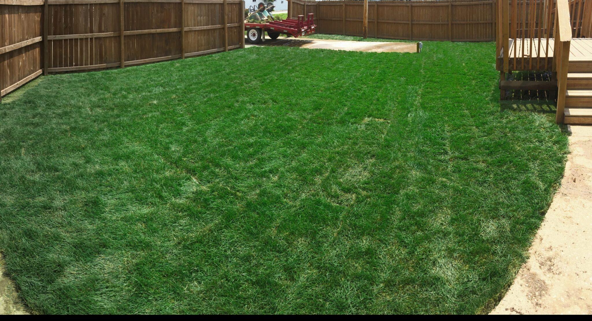 Newly Sodded Lawn