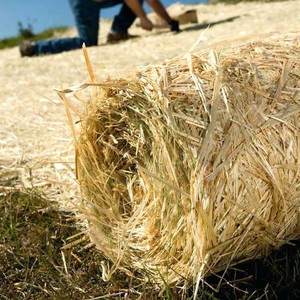 moster turf straw blanket